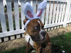 All dogs earn bunny ears at the doggie egg hunt