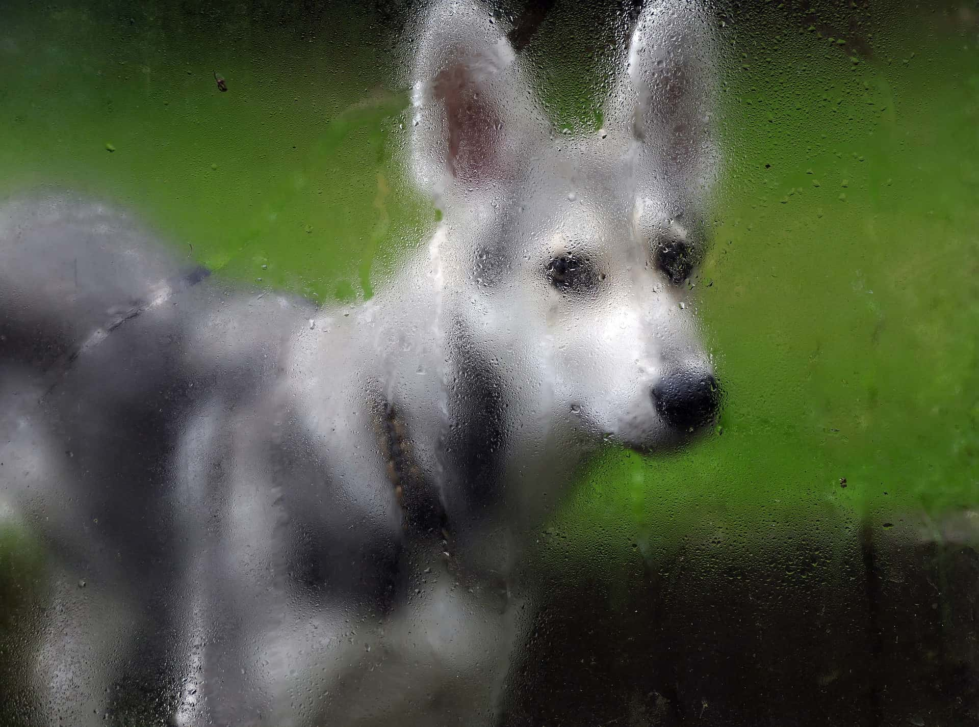 Potty training dogs in the rain - Acme Canine