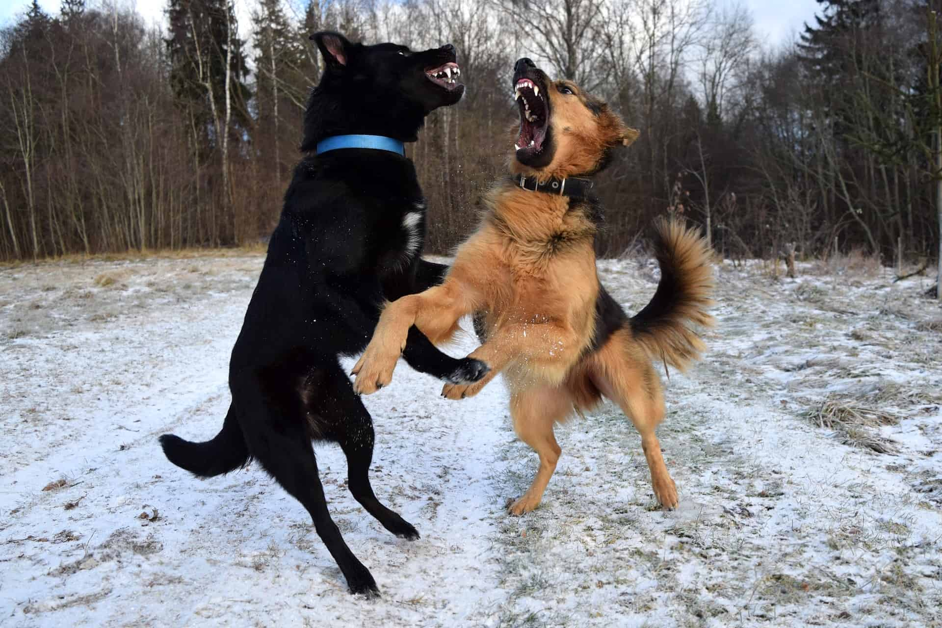 There Are Many Conditions That Can Cause Unusual Or Aggressive Behavior In Dogs