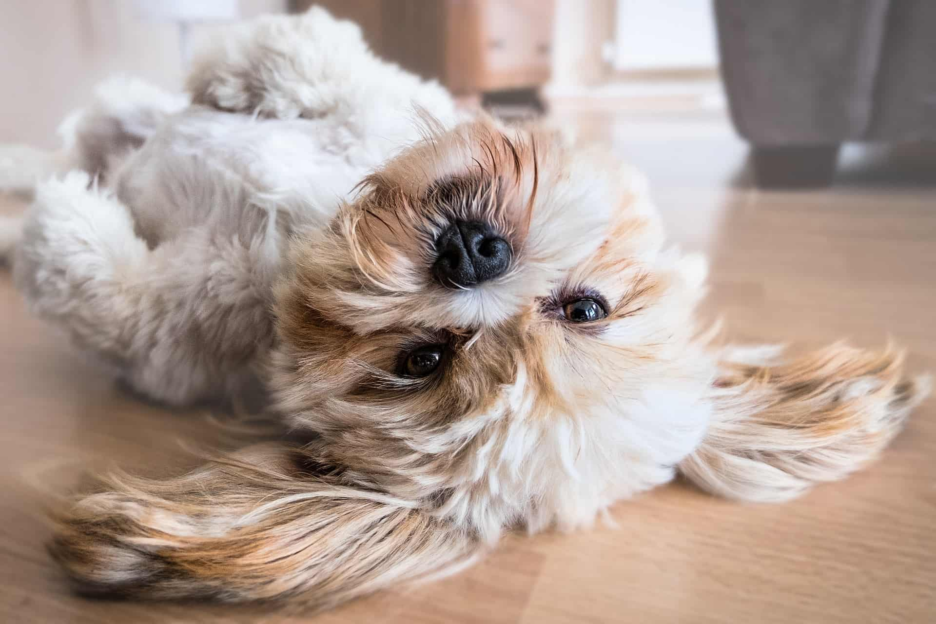 Reasons Why Your Dog Won't Sleep at Night and What to Do - Acme Canine